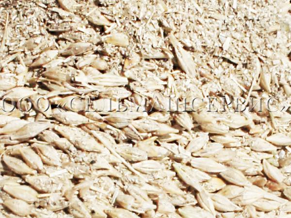Зерно до очистки