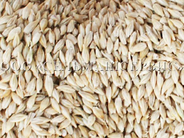 Очищенное зерно